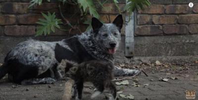 感動!障がいのある猫を優しく見守る犬