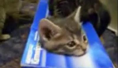 何をされても動けない・・。箱入り子猫の悲劇