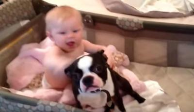 どっちもかわいい!!ボストンテリアと赤ちゃん