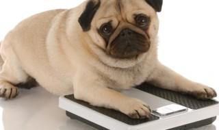 気を付けたい愛犬の「体重コントロール」