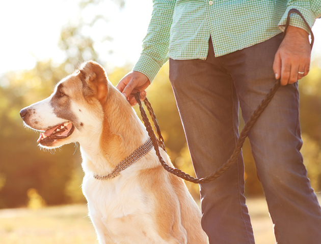 愛犬の健康は飼い主に左右される