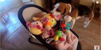 赤ちゃんおもちゃに埋もれる。おもちゃを運ぶ犬