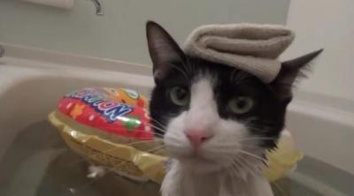 飼い主さんとのんびり入浴!お風呂大好きな猫