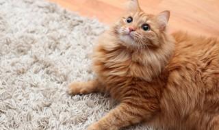 要チェック! 猫の運動不足を解消しよう