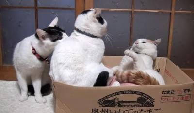 ケンカはやめて!仲裁に入る猫