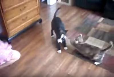 女の子のスカートを引っ張る犬に猫パンチ炸裂!