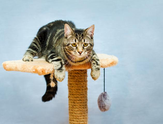 室内飼いの猫は「キャットタワー」で運動させよう!