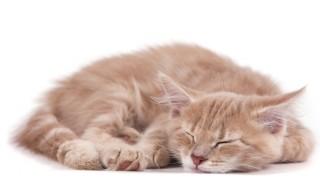 【しつけ:お留守番編】猫にお留守番させる時の注意点