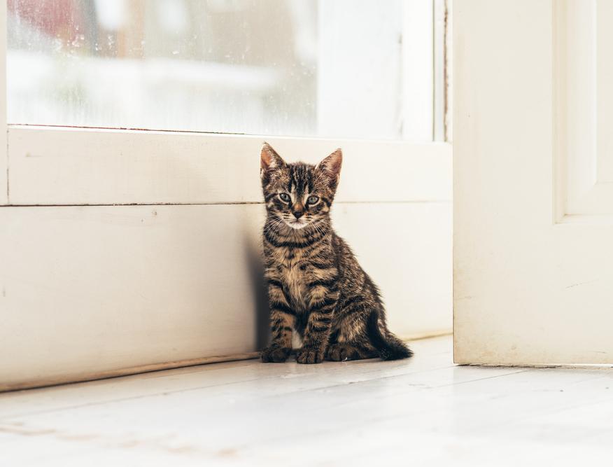 猫にお留守番をさせるには