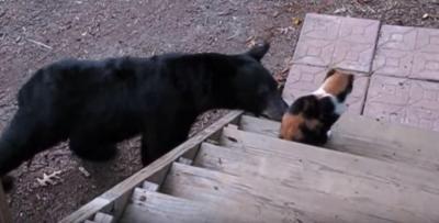 熊さえも怯える凜々し過ぎる猫パンチ