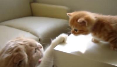 叱られてしまい、しょんぼりする子猫