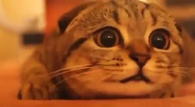 恐いけど目が離せない!ホラー映画を鑑賞する猫
