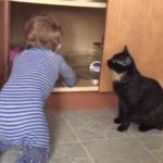 babycat_R
