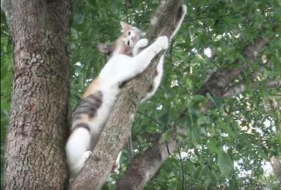 木から下りられなくなった仔猫の結末は?