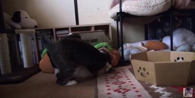 バランス崩して落ちる猫の惨劇