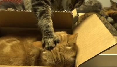 やっぱり狭い所が好き!?箱に入る10匹の猫