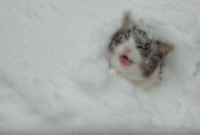 猫は喜び庭かけまわり、雪に突っ込む