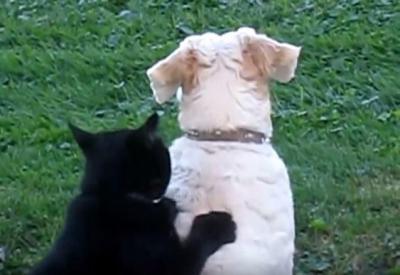 ほのぼの。猫が犬に肉球マッサージ