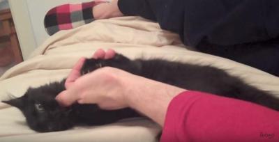 あなたはどんどん眠くなる・・・猫に催眠術?