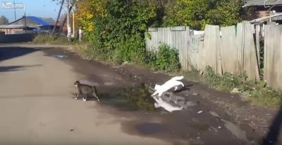 水たまりを華麗にジャンプ出来無かった猫