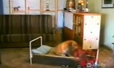 寝る前には、ベッドの前でお祈りする犬