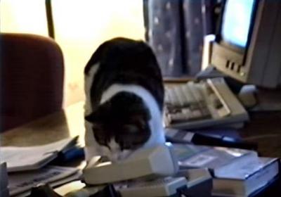 もしもし?猫が電話に出てしまう会社