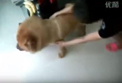 必死にお風呂を拒み抵抗する犬