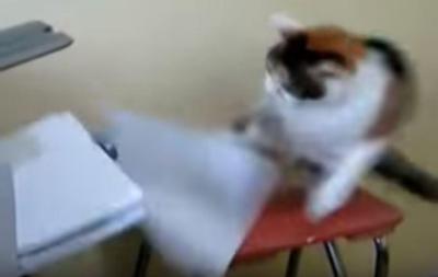 プリンターに猫パンチの連打!