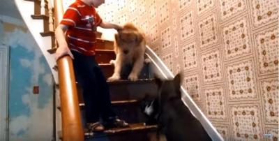 階段を猫に占領され下りられない犬