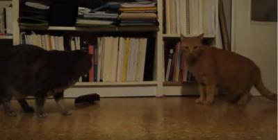 メトロノームに敏感に反応する猫