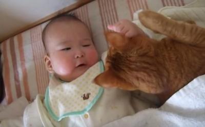健気でかわいい・・!赤ちゃんの面倒を見る猫