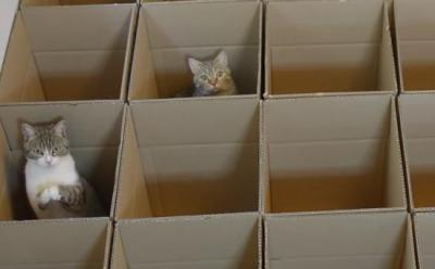 おねだりポーズで友達を呼ぶ猫