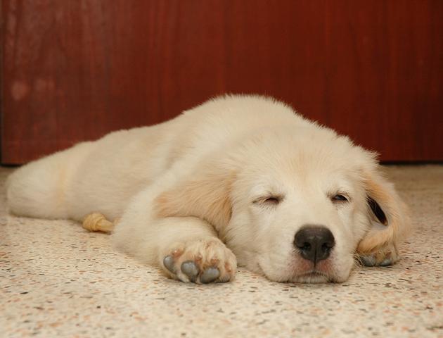 寝姿から気持ちを読み取って犬との絆を深めましょう