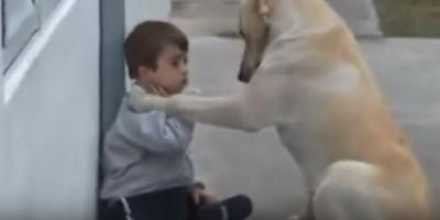 言葉が無くても犬は全てを愛します