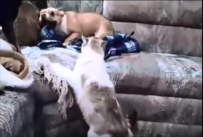猫に吠え続けた結果が情けなさ過ぎる犬