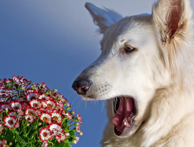 ペットも花粉症に要注意!チェックしたい症状と対処法