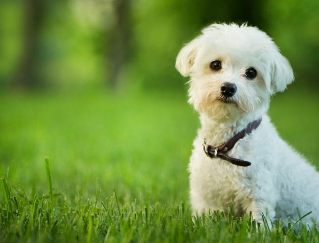 【しつけ:お散歩編】意外と多い? 犬の「散歩嫌い」の原因