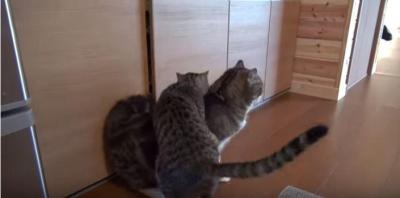 4コマ漫画のようなオモシロ展開、戸棚と猫
