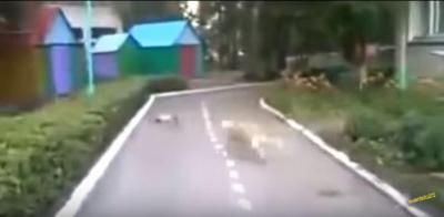 死んだふりをする猫とだまされる犬