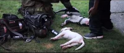 火事の中、小さな犬の命を救う隊員に感動