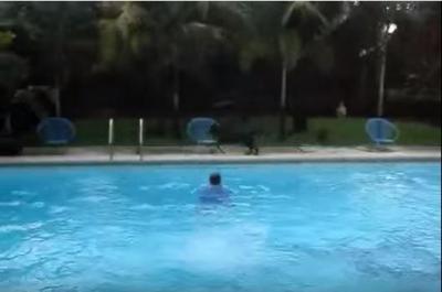 ドボン!次々プールへ突き落とす犬
