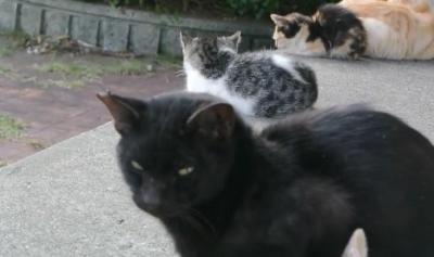 集まって何をしてるの・・・?猫の集会現場!
