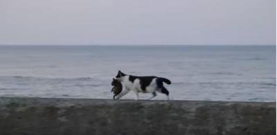 ほのぼのとした風景。海と猫の親子