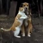 lovelovedogcat_R