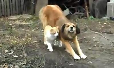 スキ!スキ!スキ!猫から愛情をそそがれる犬