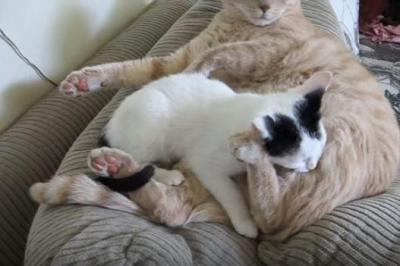 おっぱいを探す仔猫が怒られた訳は?