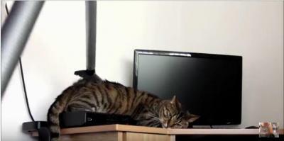 猫のグルーミングアイテムは掃除機