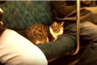 もしや看板猫?電車でくつろぎ過ぎな猫