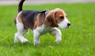 愛犬の健康を「歩き方」で見る?犬の歩き方とその変化