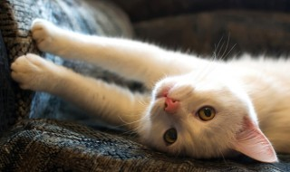 【しつけ:身の回り編】猫の爪とぎはどうやって防ぐ?